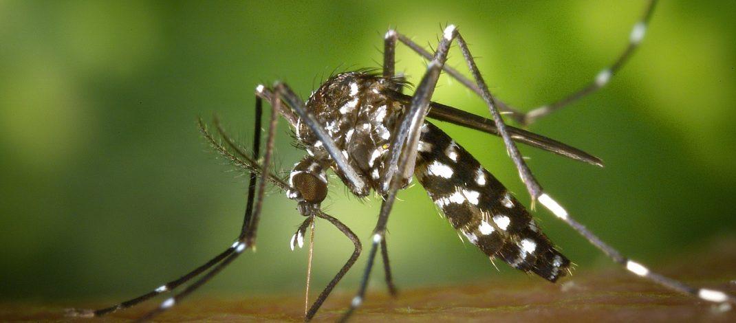 Ukąszenia owadów – naturalne i skuteczne metody odstraszania owadów.